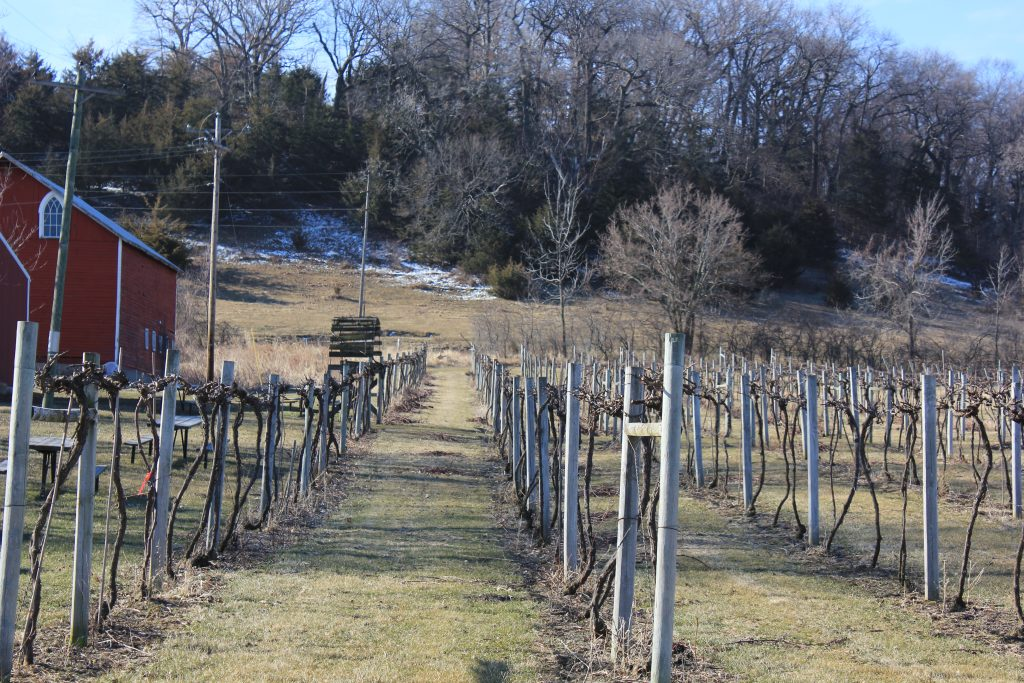 Illinois vineyard in winter/Photo: David Hammond